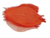 Orange Skeleton Leaves 7.6cm Natural Colour Flower Making Natural Rubber Leaves